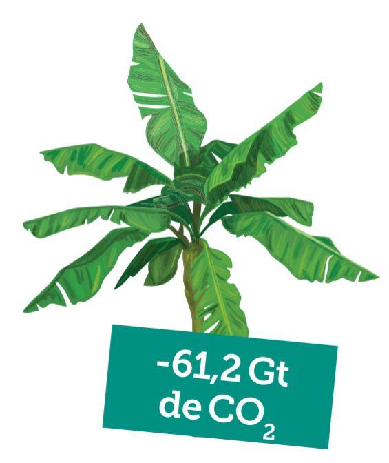 Réhabiliter les forêts tropicales